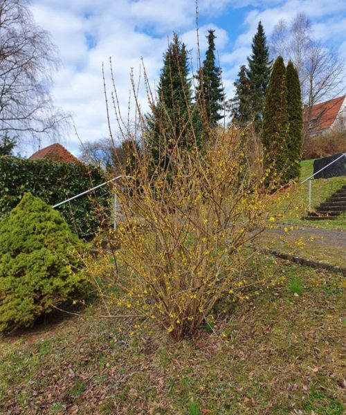 Frühling Friedhof
