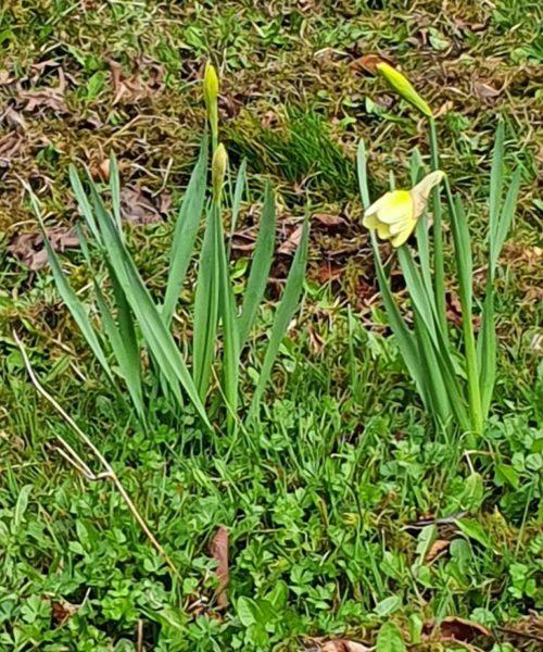 Frühling Kirchberg